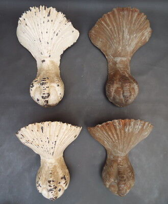 Set of 4 antique cast iron bath feet - Shell and ball & claw design