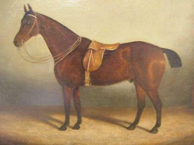 Large 19Th Century Equine Horse Oil Painting - Good Frame - English School