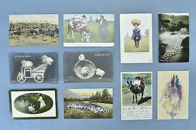 Antique MIXED LOT of 10 POSTCARDS COW SHEEP OSTRICH CHICKS SWAN GOOSE #04971
