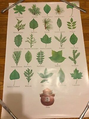 Vintage USDA Forest Service SMOKEY BEAR Poster Tree Identification Leaves THINK