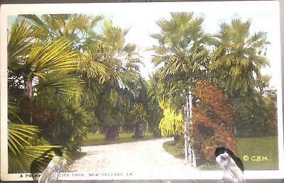 (PC 74) Vintage Post Card-A Pathway in City Park New Orleans, LA..
