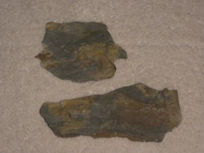 Shale Fossils From Poconos in PA Possibly Leafs or Fins/Wings