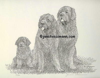 FINE ART PRINT Newfoundland Newfies Newfy Dog Signed Numbered New, FromTheArtist