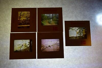 Vintage Lot of 5 Kodachrome Photo Slides - (View of Birds At Zoos)