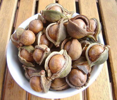 Fresh Organically Grown Macadamia Nuts/Seeds with Shell On - 1kg plus