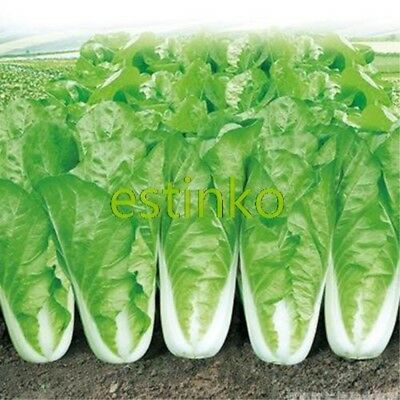 300pcs Chinese Cabbage Seed Vegetable Seed Cabbage Garden Vegetable Bonsai Plant