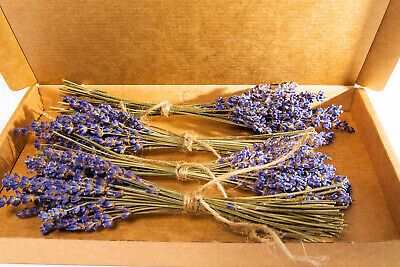 4 Mini Bunches Dried French Lavender Flower