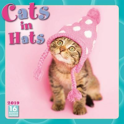 Cats In Hats Official 2019 Wall Calendar New & Sealed