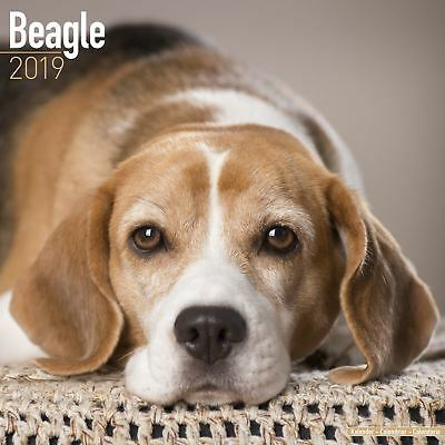Beagle Official 2019 Wall Calendar New & Sealed