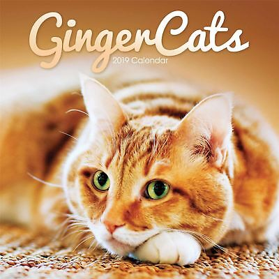 Ginger Cats Official 2019 Wall Calendar New & Sealed