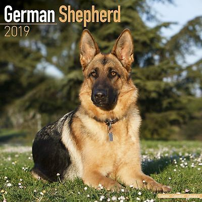 German Shepherds Official 2019 Wall Calendar New & Sealed