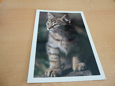 CPM Carte Postale Chat