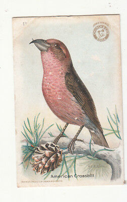 Arm & Hammer Saleratus Soda Church & Co Usefull Birds American Crossbill Card