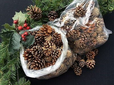"""LARGE BAG 50"" PINE CONES CHRISTMAS CRAFTS, FLORAL, GARLANDS, WREATHS. 6-8cm"