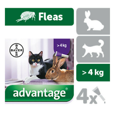 ADVANTAGE 80 ( 0,80ml) x 4 pipettes Ticks and fleas treatment Cat rabbit + 4 kg