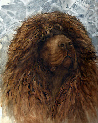 Irish Water Spaniel Male Head Study Print by Martha Van Loan signed and numbered
