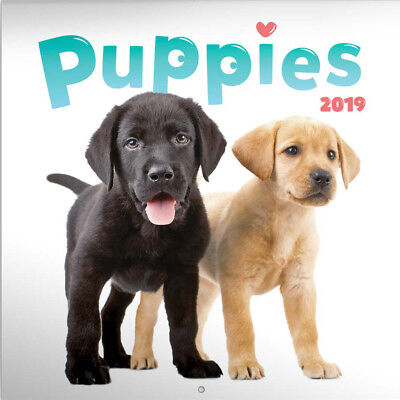 """2019 Puppies Calendar 2019 With """"free"""" Uk Tracked Delivery"""