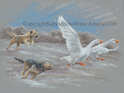 Border Terrier Dogs Chasing Geese Christmas cards pack of 10 by P Doyle C556X
