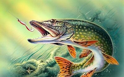 Fish Fishing Pike Art Picture