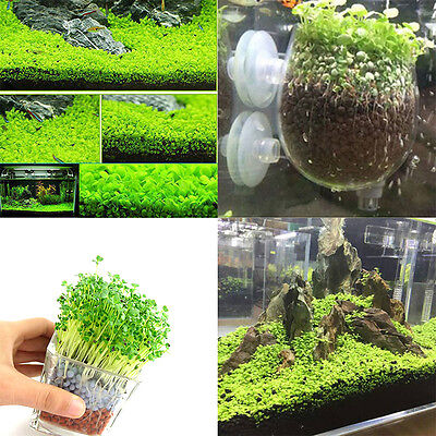Aquarium Plant Seeds Aquatic Double Leaf Carpet Water Grass Fish Tank Decor TOP+