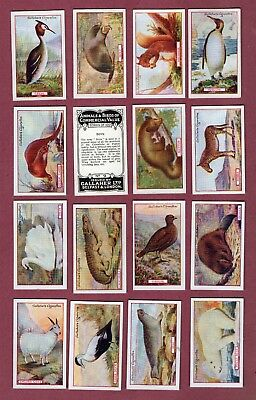 Tobacco Cigarette cards set Animals & Birds of commercial, Polar Bear,Pheasant,