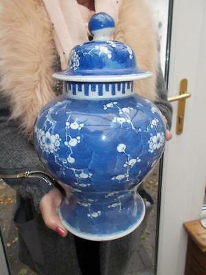 Large Lidded Chinese Blue Prunus Temple Jar 1800S Porcelain Blue Concentric Ring
