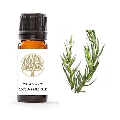 Natural Tea Tree Anti Fungal Nail Infection Treatment Finger Toe Antifungal 10ml