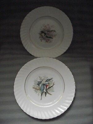 2x Rosina China Co.Ltd - Queen`s - Series 1 -`Birds of America`- Made in England