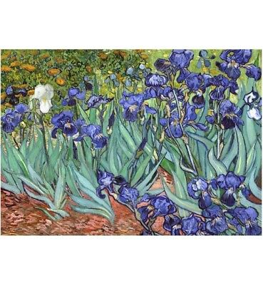 1000 piece jigsaw puzzle - Irises (High Quality European Blue Board)