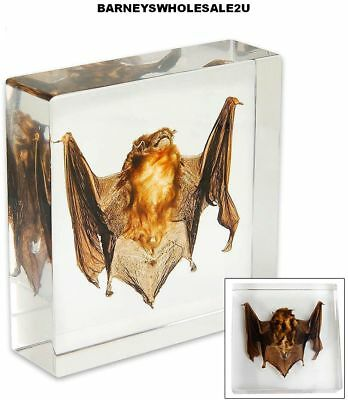Real Bat Specimen In Clear Lucite Paperweight - New-VERY NICE