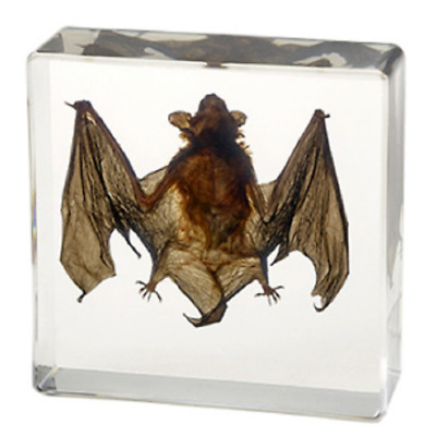Bat Taxidermy Collection Embedded In Clear Lucite Block Embedding Specimen