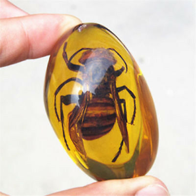 Beautiful Natural Amber Hornet Fossil True Insect Specimens Manual Polishing