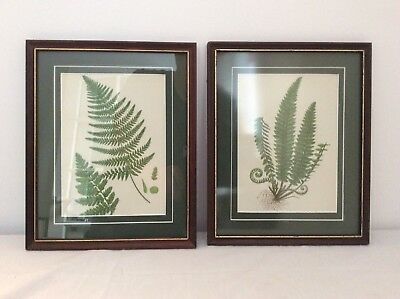 "PAIR OF ANNE PRATT ORIGINAL ANTIQUE 1870 FERN PRINTS IN VINTAGE  8x10"" FRAMES"