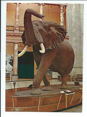 Vintage Postcard, Elephant, Smithsonian Museum of Natural History, D. C. unused