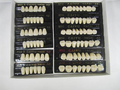3 Complete Sets Acrylic Denture Teeth A2 Size  Large Medium Small In One Box