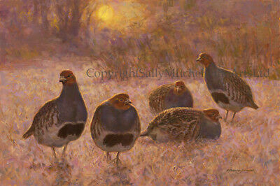 Partridges in the Snow Christmas cards pack of 10 by F Haycock C559X