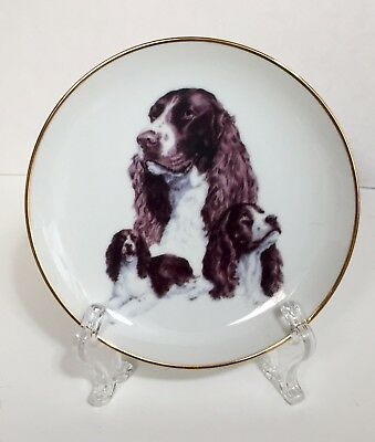 Liver & White Springer Spaniel Dog Decorative Collector Plate China w/ Gold Rim