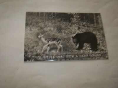 Vintage A LITTLE DEER WITH A BEAR BEHIND BW Postcard Posted B1G1