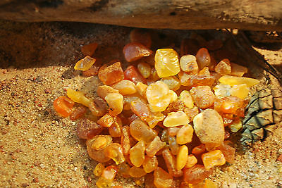 Raw Baltic Amber 30gms small chips Butterscotch genuine for aquarium