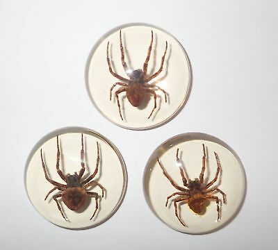 Insect Cabochon Ghost Spider Specimen 35 mm Round clear 3 pieces Lot