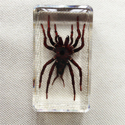 Tarantula SpiderBlack Earth Tiger Insect Specimen In Clear Lucite Paperweight