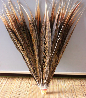 3pcs Natural Golden Pheasant Tail Feathers 45-50cm DIY Art Craft Millinery Vase