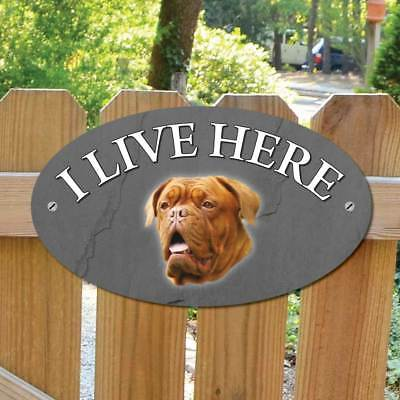 French Mastiff Dog Gate Sign, I Live Here Sign, Robust Outdoor Dog Gate Plaque