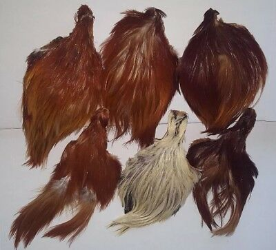 Lot of 6 SIX Fly tying capes Dry Fly tying feathers Fly tying Materials Art NR