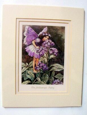 Double Matted Fairy Print, A Heliotrope Fairy, From Cicely Mary Barker