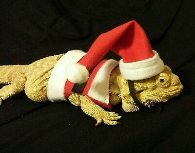 Lil' Bestie Bearded Dragon reptile Harness and Leash SANTA SUIT