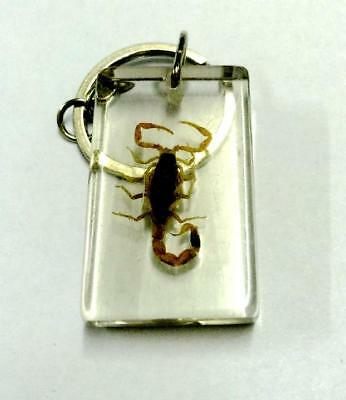 Hot Scorpion Jewelry  Clear Gold Scorpion Design Key-Chains Y14