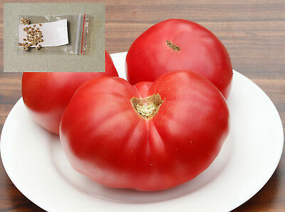 "50+ Tomato Seeds ""MUSCAT"". Pink Sweet Large, Heirloom, Non-GMO. Combined S/H."