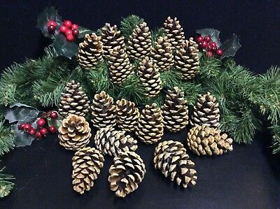 12 LARGE PINE CONES CHRISTMAS CRAFTS, TREES-GARLANDS-WREATHS-DECOR 7-9cm