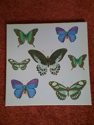 CANVAS PRINT FRAME of A Few BUTTERFLIES NEARLY NEW CONDITION